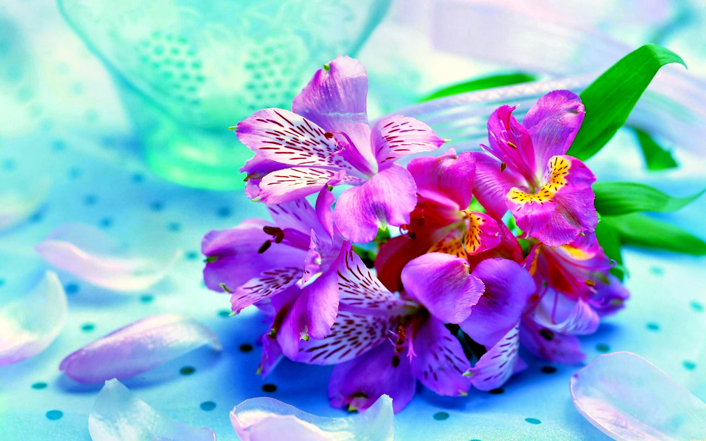 13907 flowers hd wallpapers | background images - wallpaper abyss