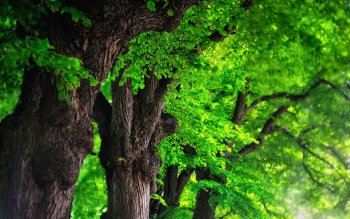 Earth - Tree Wallpapers and Backgrounds ID : 326825