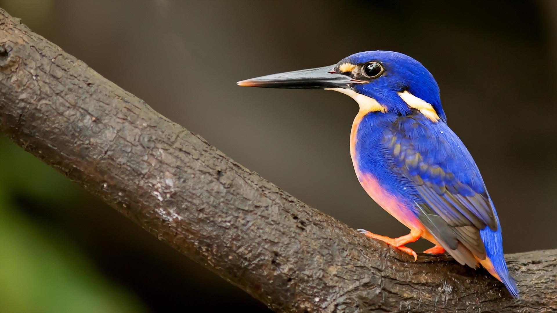 bird with a long beak birds of prey