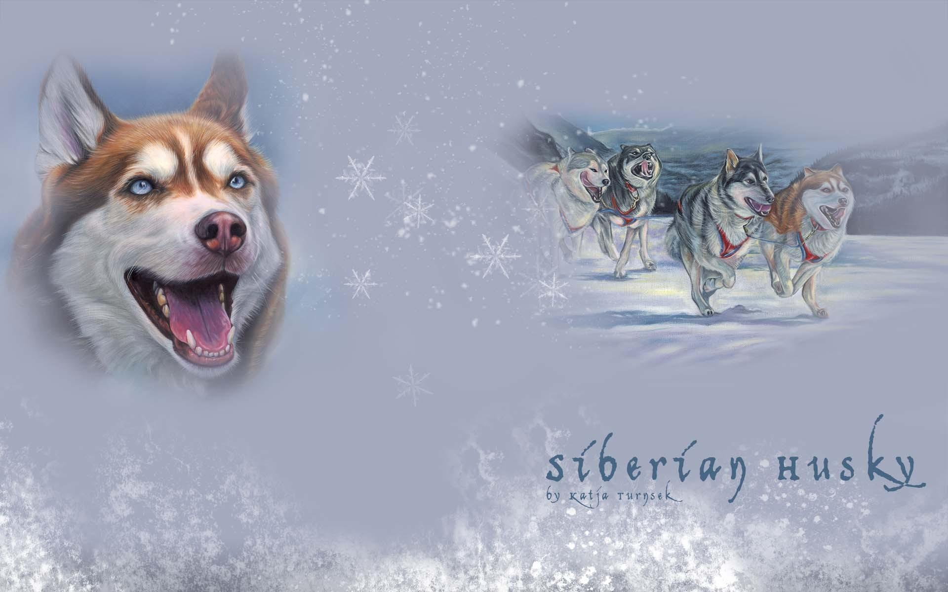 Siberian Husky Fondos De Pantalla, Fondos De Escritorio