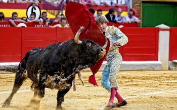 Sports - Bullfighting Wallpapers and Backgrounds ID : 327767