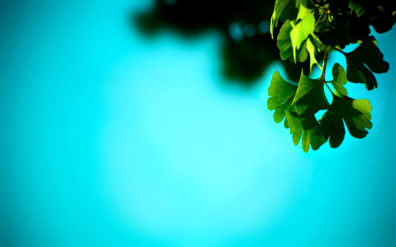 NATURE 00 Green Leaves 29november2012friday 054531 VersionOne