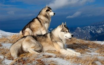 Animalia - Perro Wallpapers and Backgrounds ID : 329386