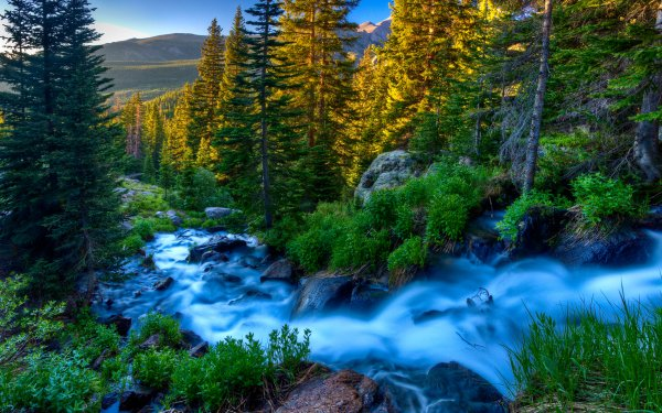 Earth Stream Forest Creek HD Wallpaper | Background Image