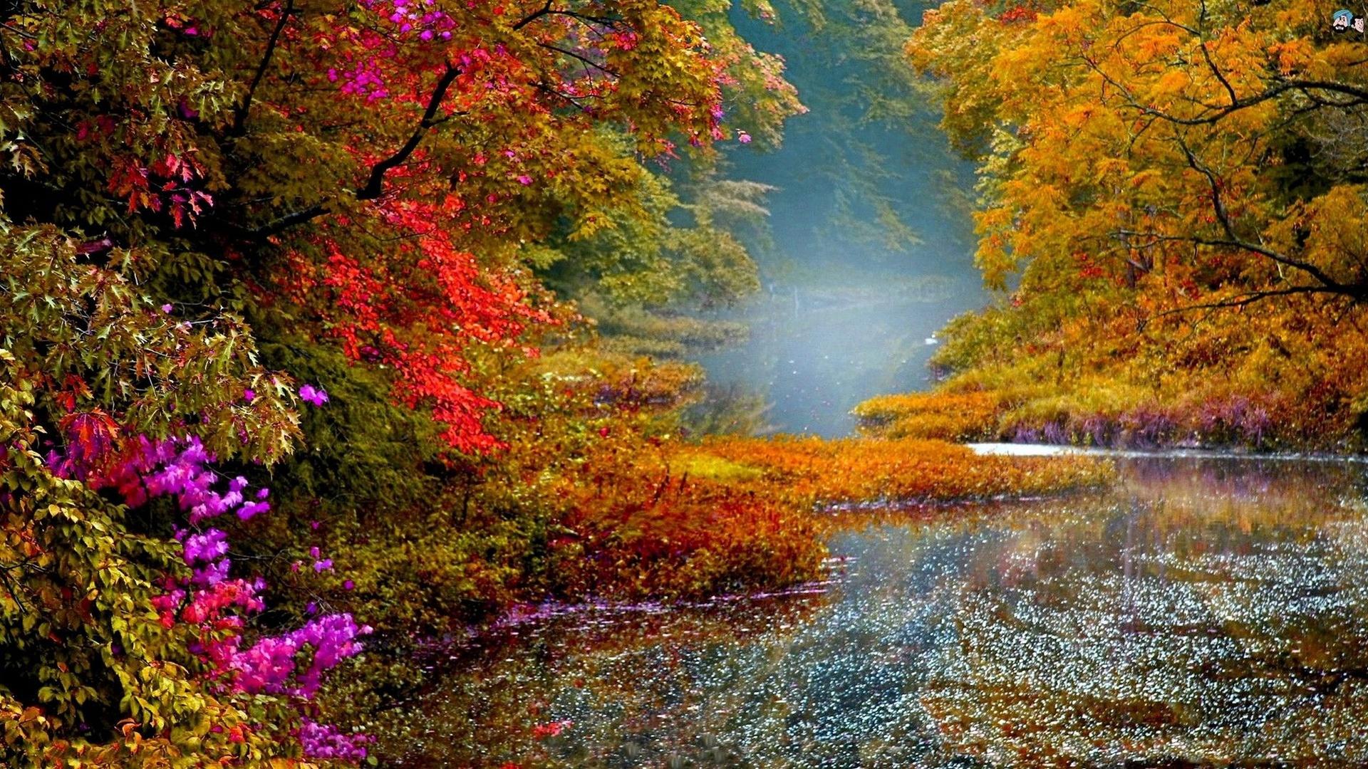 Осень картинки красивые цветы