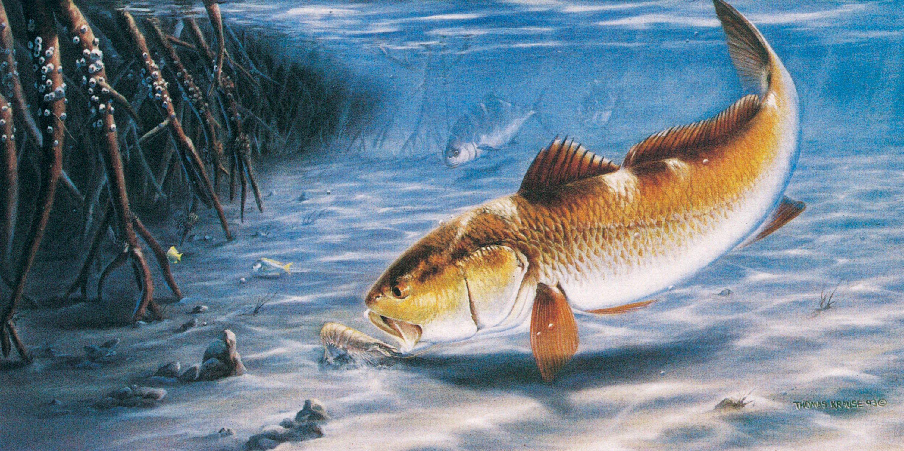 Fish full hd wallpaper and background image 3001x1500 for Robalo fish in english
