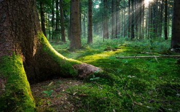 Earth - Forest Wallpapers and Backgrounds ID : 332423