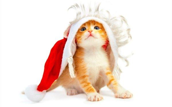 Djur Katt Katter Christmas Helgdag HD Wallpaper | Background Image