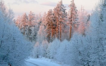 Earth - Winter Wallpapers and Backgrounds ID : 336914