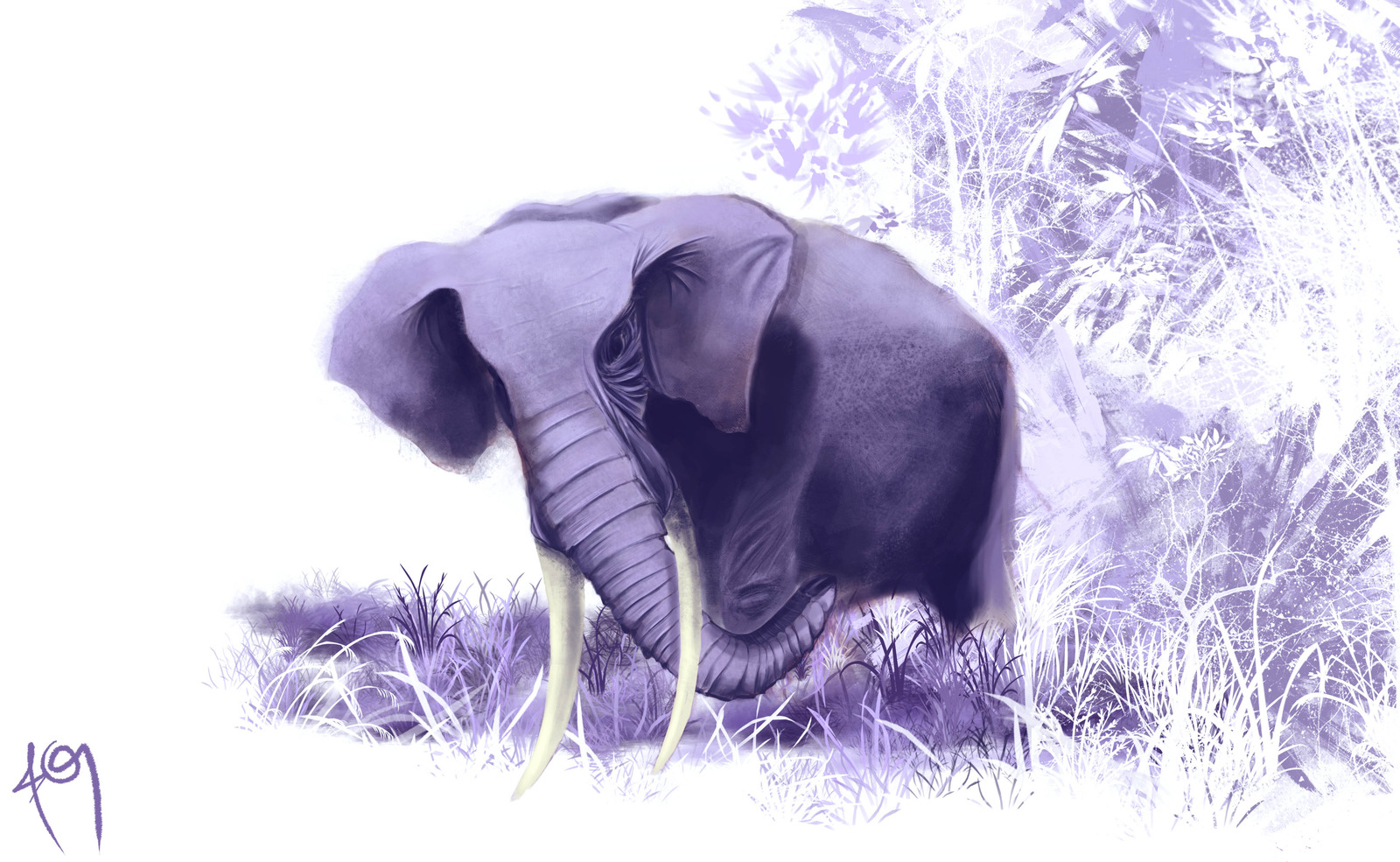Elephant Wallpaper and Background 1600x985 ID338485