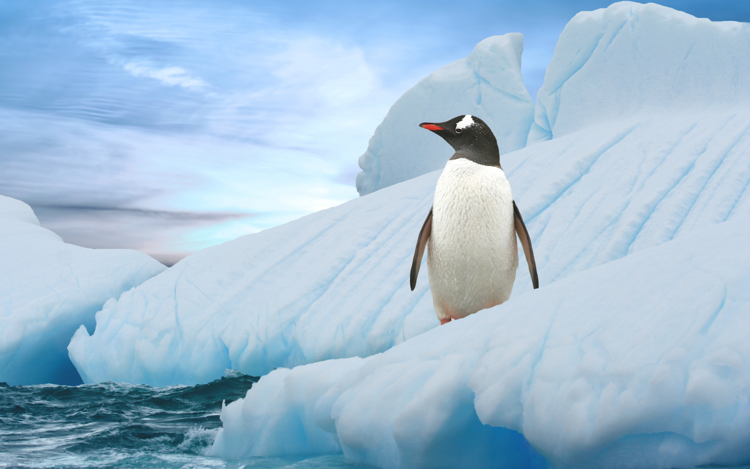 penguin hd wallpaper | background image | 2560x1600 | id:340527