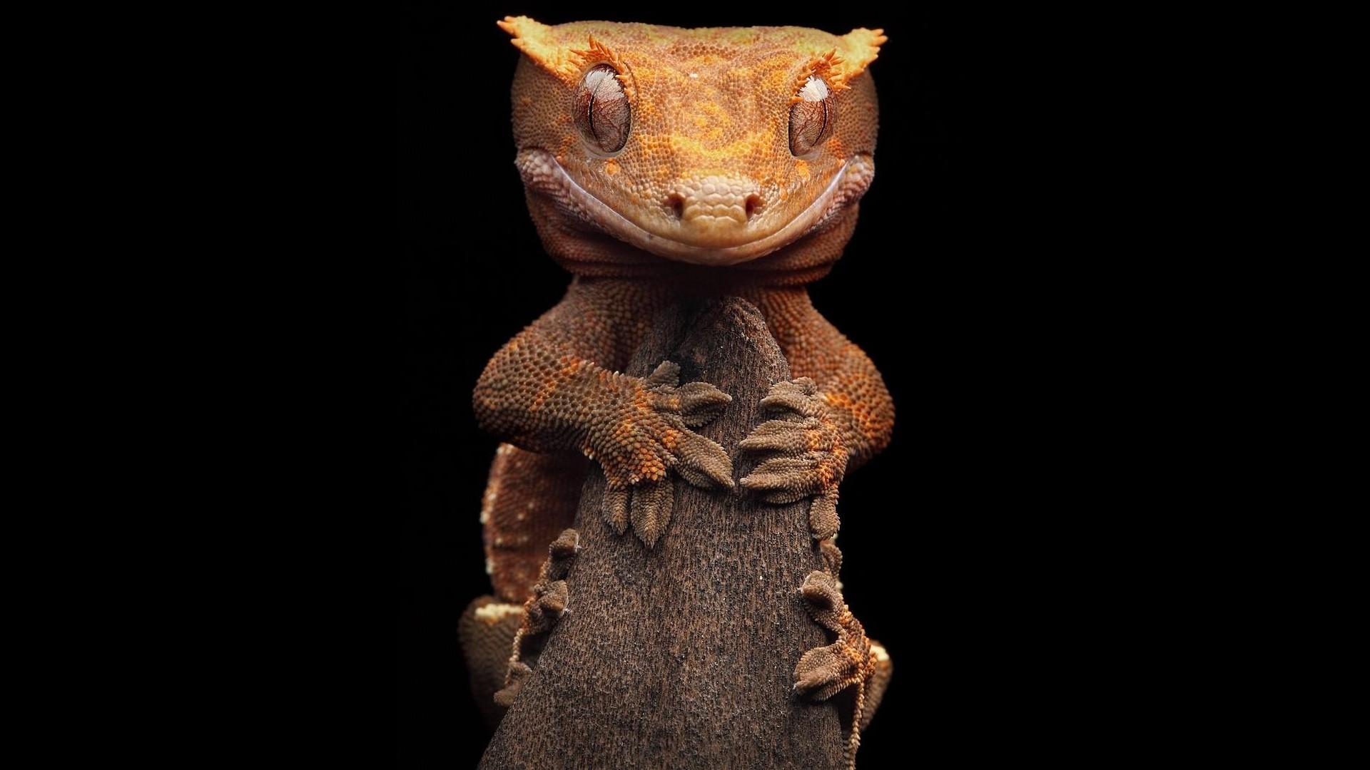 3840x2160 wallpaper lizard gecko - photo #35