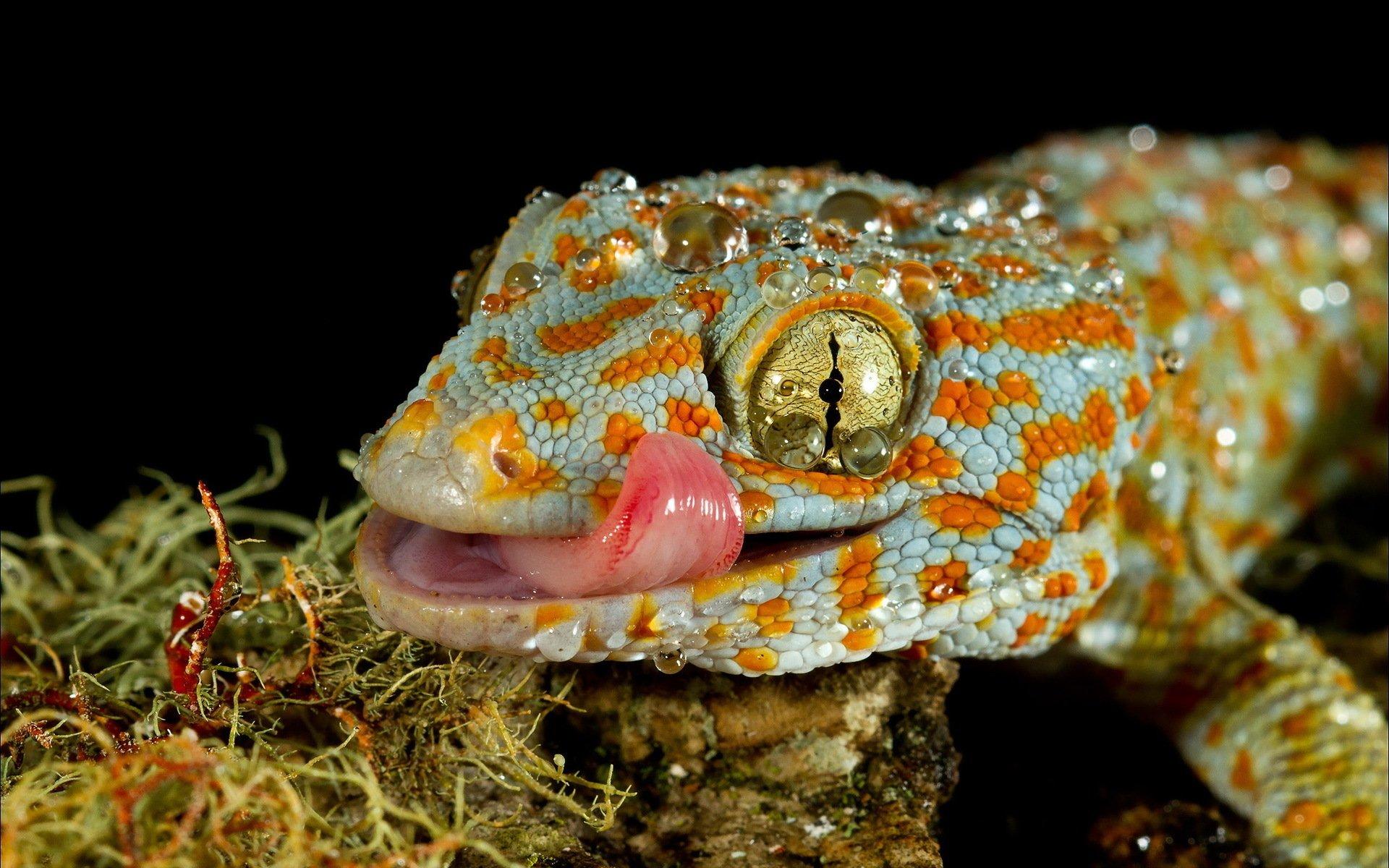 3840x2160 wallpaper lizard gecko - photo #21