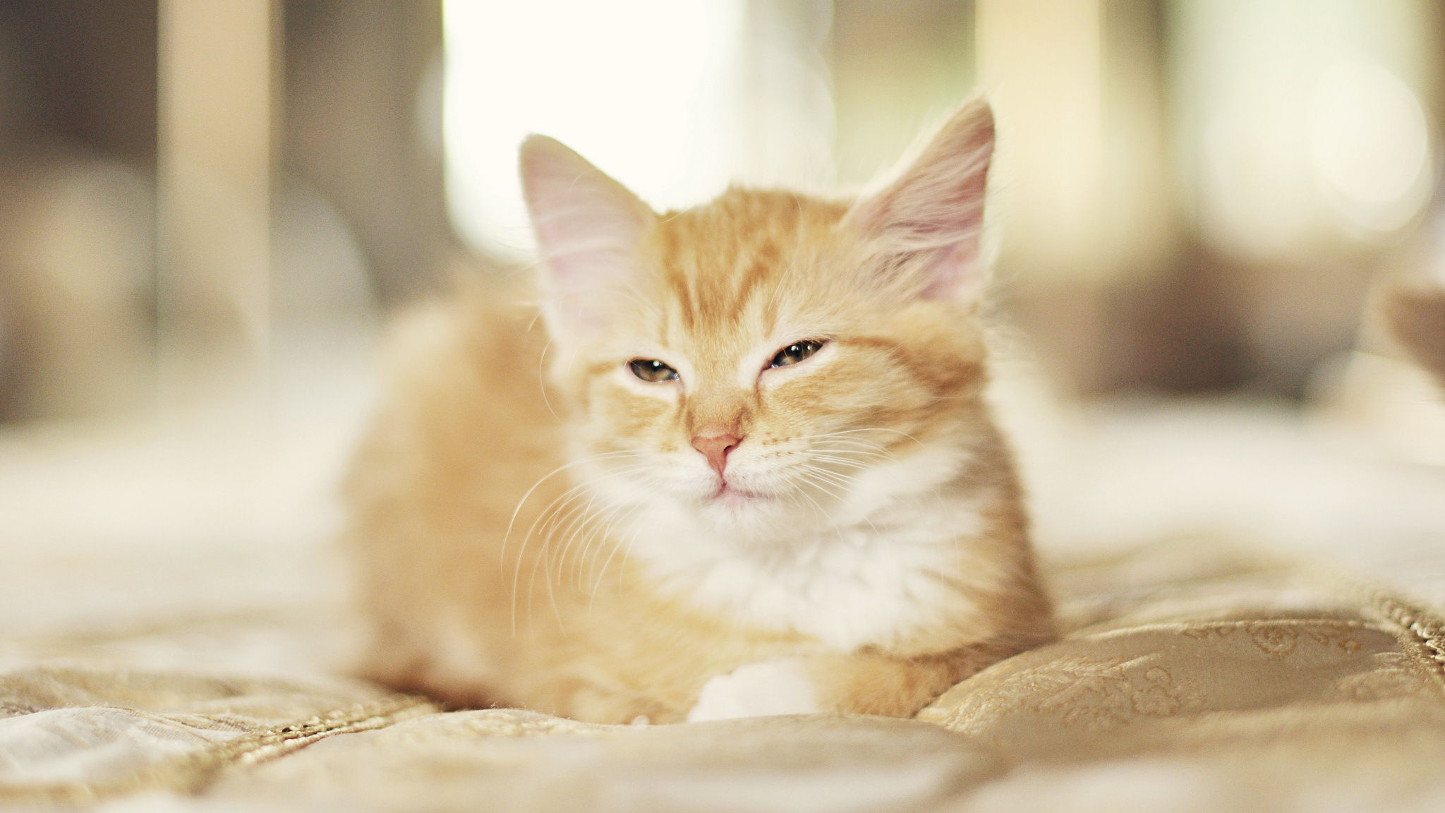 Cat full hd wallpaper and background image 2048x1152 for Fotos 2048x1152