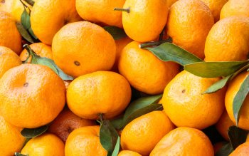 Food - Orange Wallpapers and Backgrounds ID : 342669