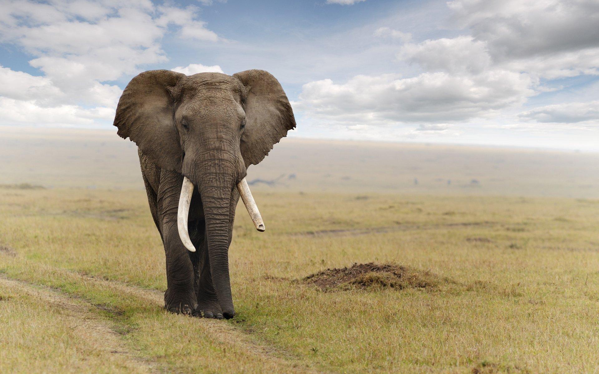 Beautiful Pictures Of Elephant In Hd: Elefante Full HD Fondo De Pantalla And Fondo De Escritorio