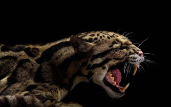 Animal - Ocelot Wallpapers and Backgrounds ID : 344885