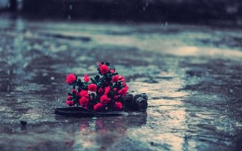 Fotografie - Regen Wallpapers and Backgrounds ID : 345392
