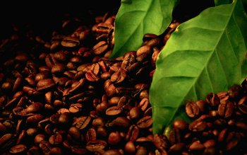 Alimento - Coffee Wallpapers and Backgrounds ID : 346071