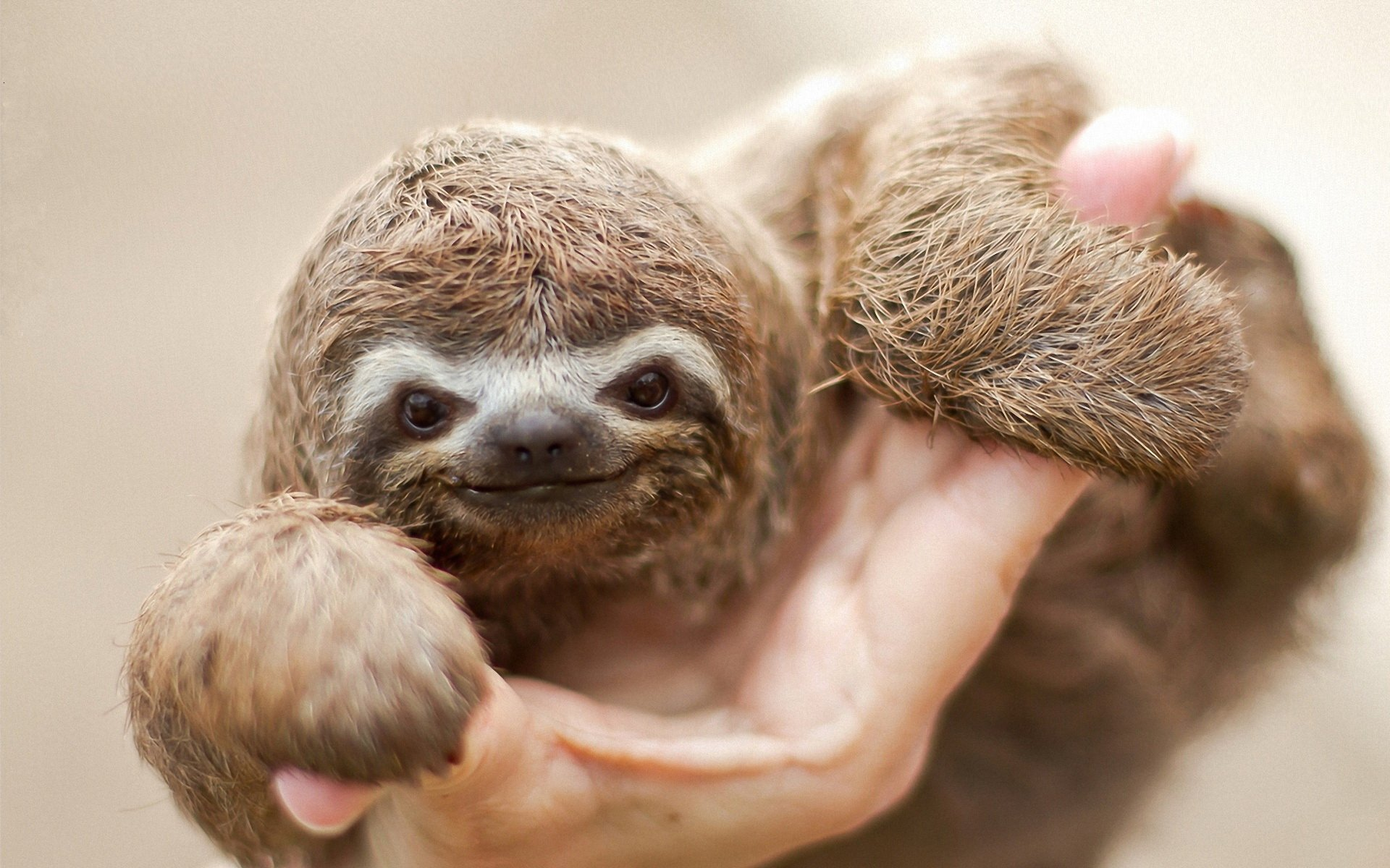 9 Sloth HD Wallpapers