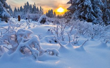 Earth - Winter Wallpapers and Backgrounds ID : 347212