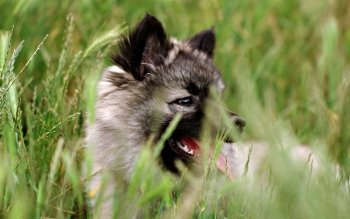 Animal - Wolf Wallpapers and Backgrounds ID : 347876
