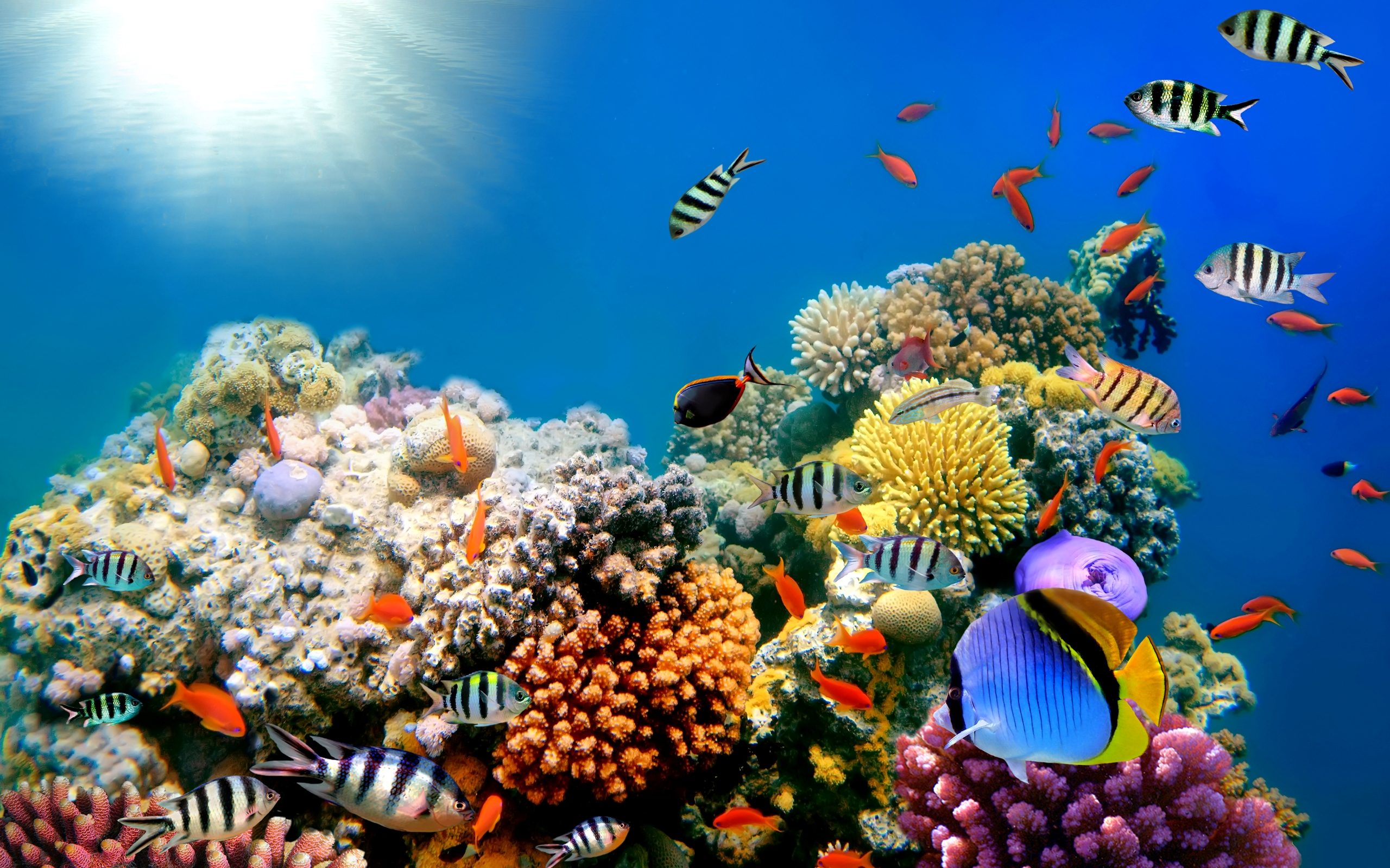 484 fish hd wallpapers backgrounds wallpaper abyss - Underwater desktop background ...