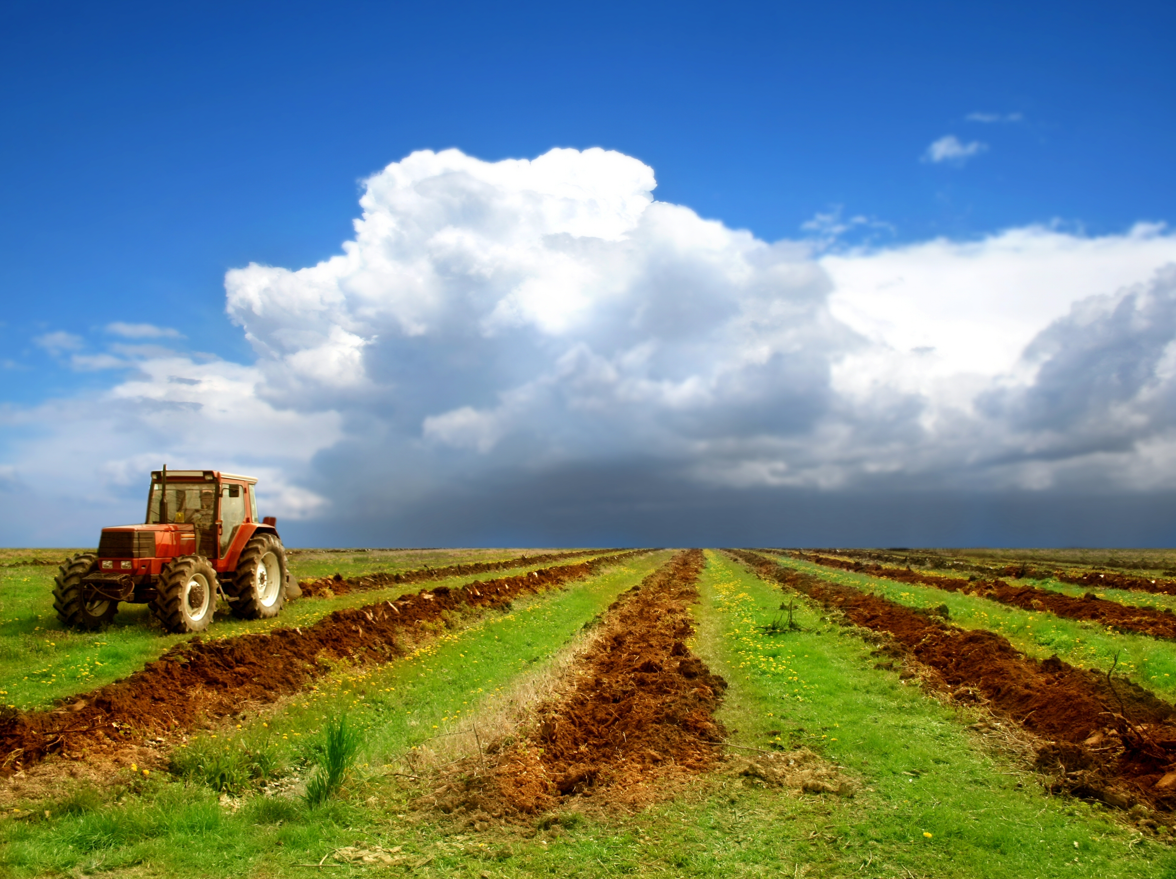 Agriculture 4k Ultra HD Wallpaper   Background Image ...
