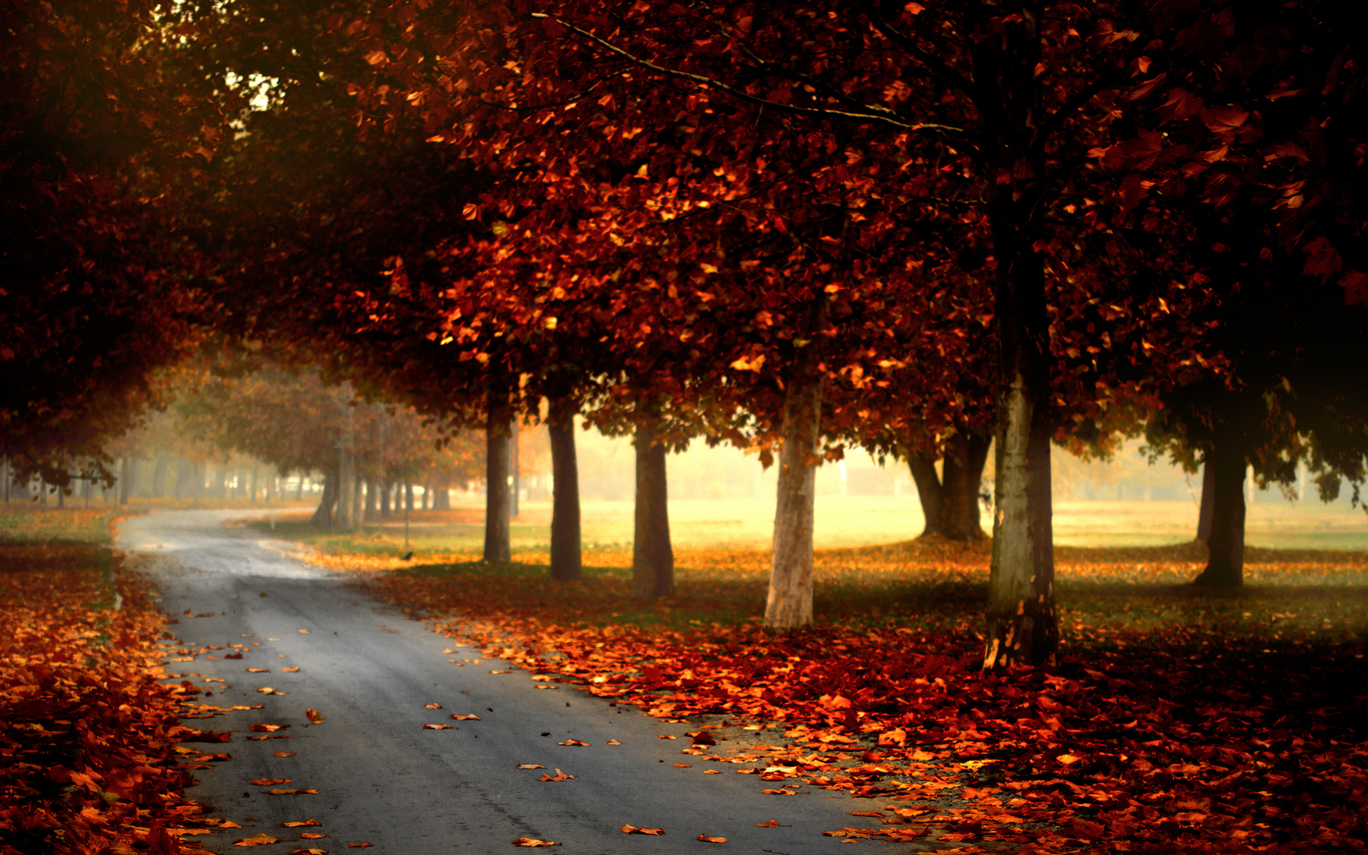 Fall Leaves Photography Wallpaper Fall Full HD Wallpaper...