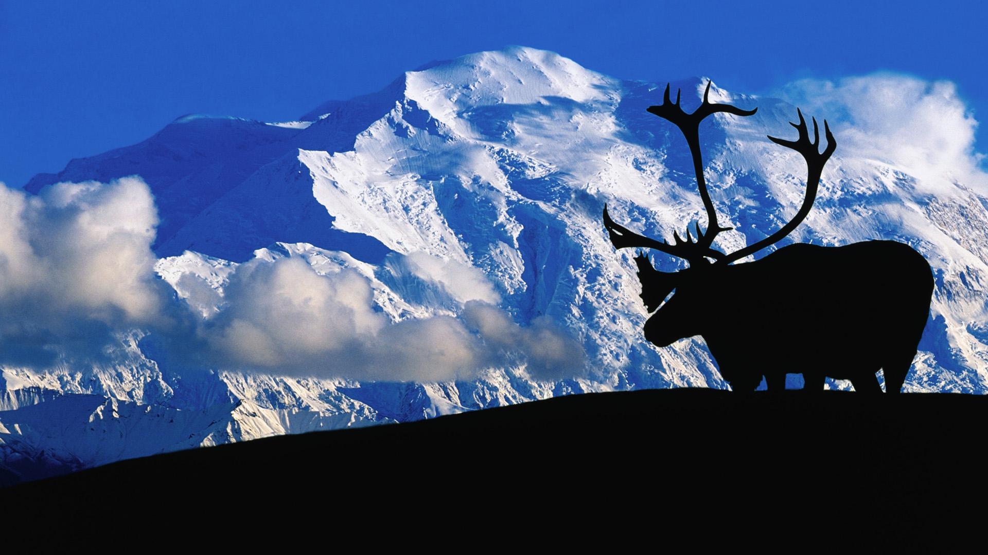moose fall desktop wallpaper - photo #49