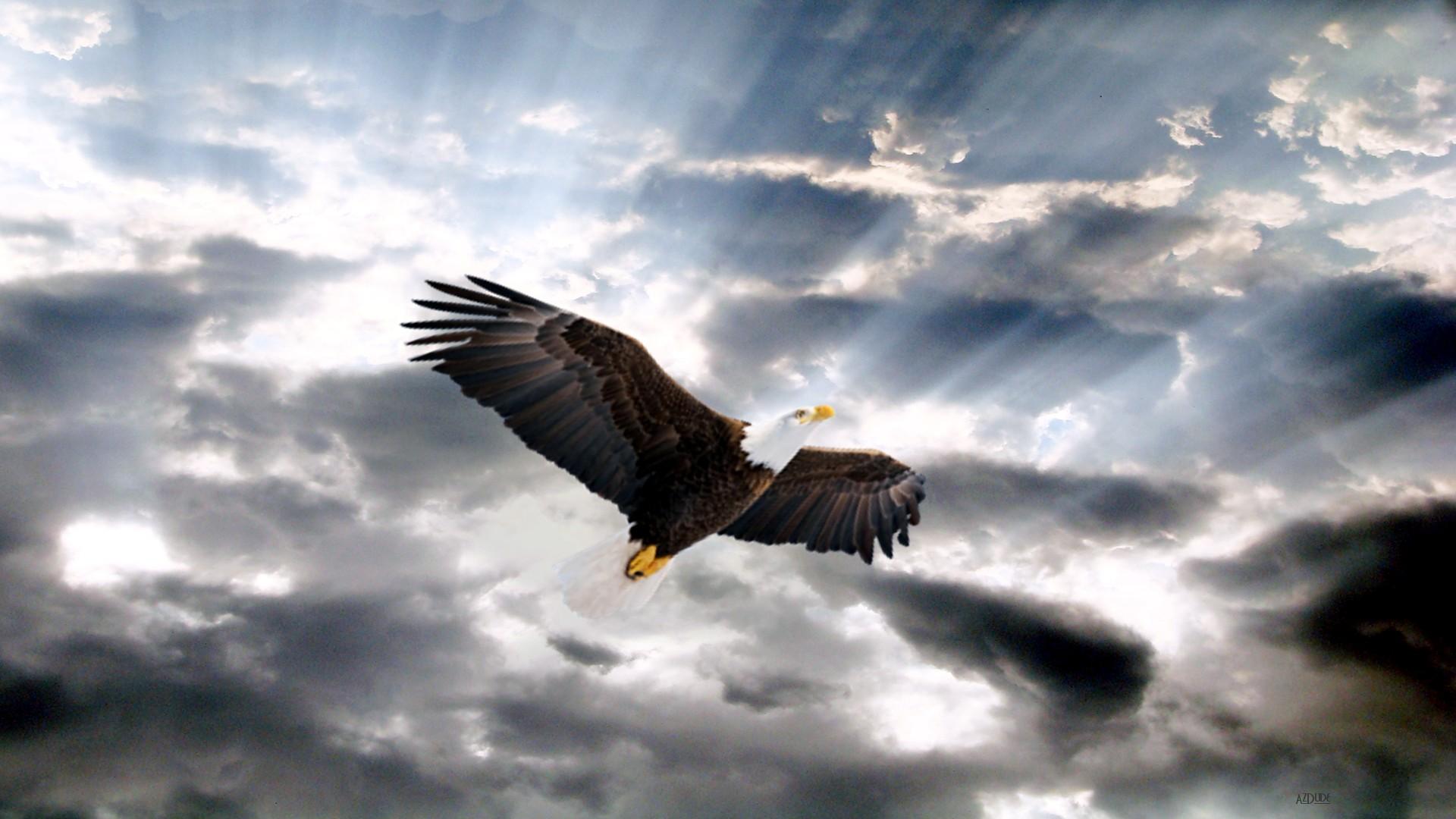 небольшом орел кружит картинки просмотра