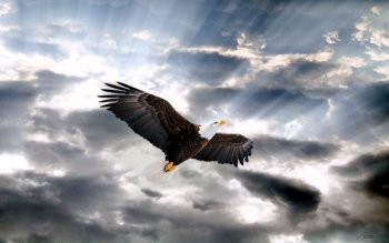 340 Eagle HD Wallpapers | Background Images - Wallpaper Abyss - Page 2