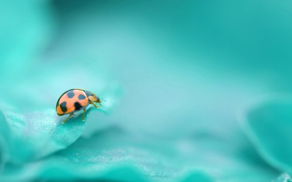 HD Wallpaper | Background Image ID:349274
