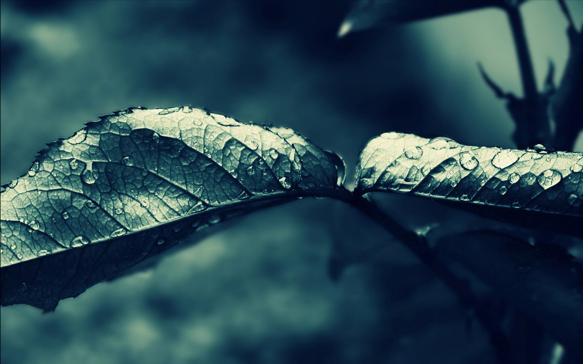 leaf full hd wallpaper and background image | 1920x1200 | id:350116
