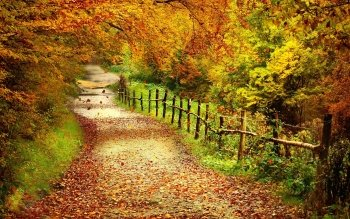 Earth - Autumn Wallpapers and Backgrounds ID : 350427