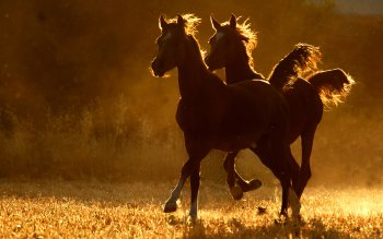 Animal - Horse Wallpapers and Backgrounds ID : 352651