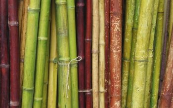 Tierra - Bamboo Wallpapers and Backgrounds ID : 352776