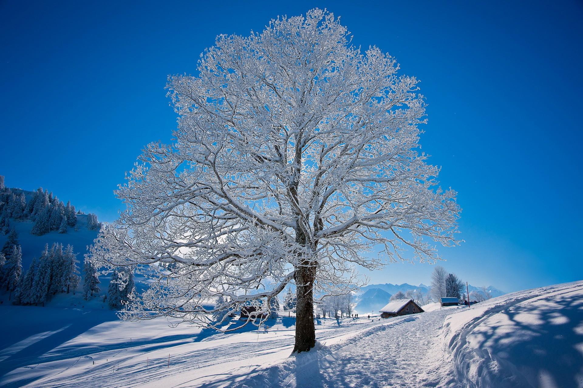 Winter HD Wallpaper | Background Image | 1920x1280 | ID ...