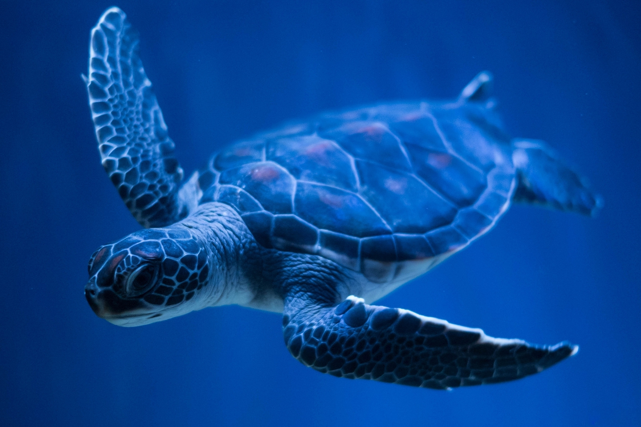 turtle full hd wallpaper and background image 2048x1365