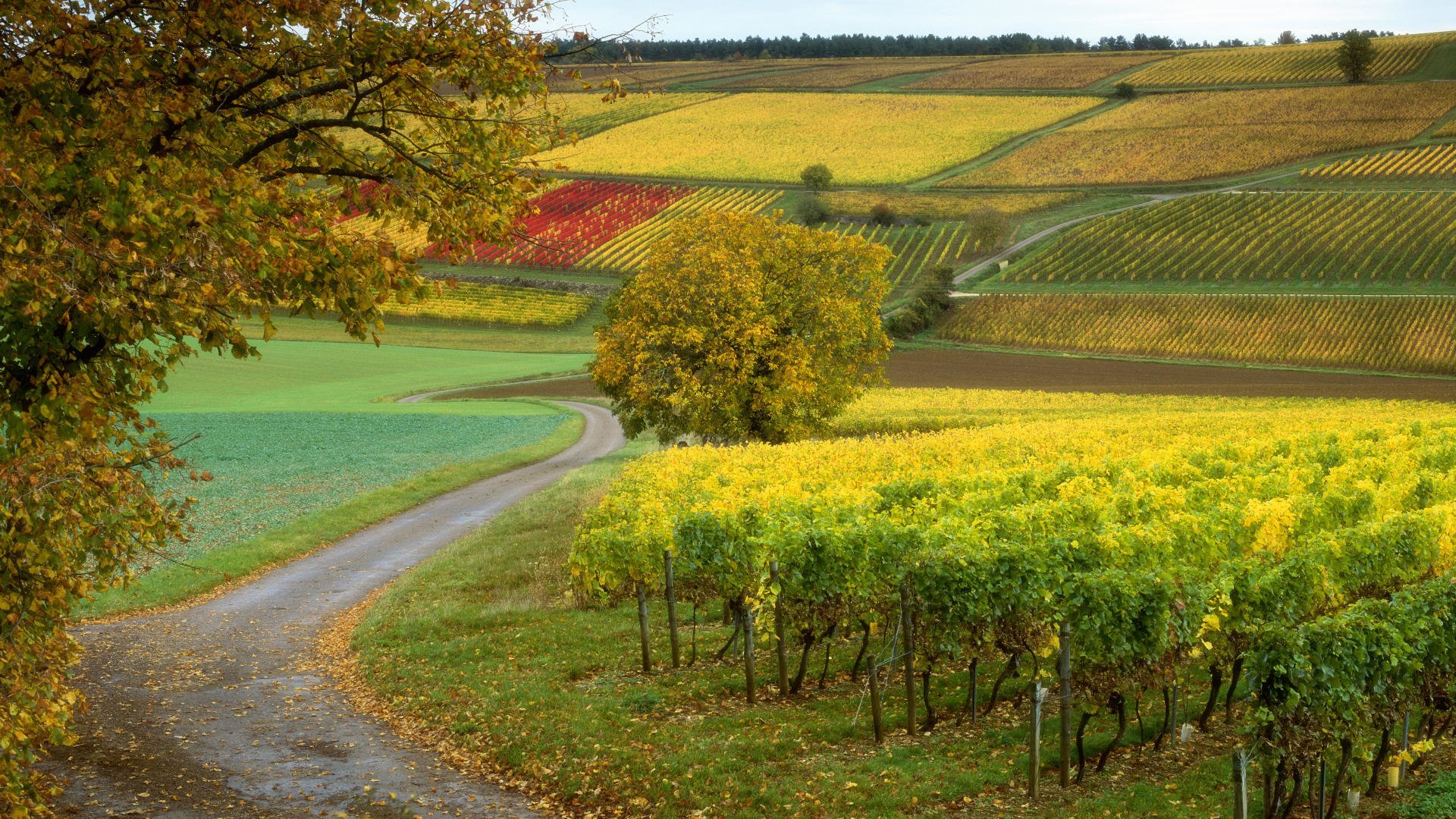 wineyard beckgraund-ის სურათის შედეგი