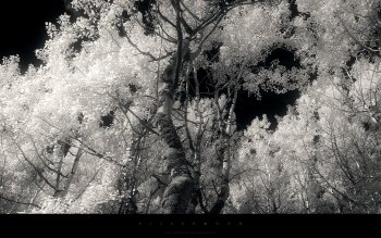 HD Wallpaper | Background ID:356452