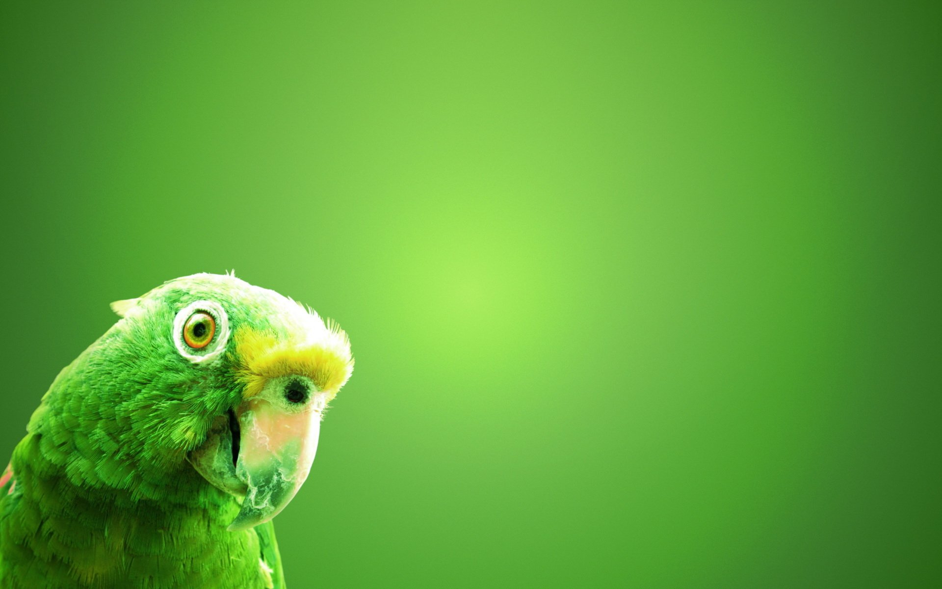 Parrot hd wallpaper background image 1920x1200 id - Animal and bird hd wallpaper ...