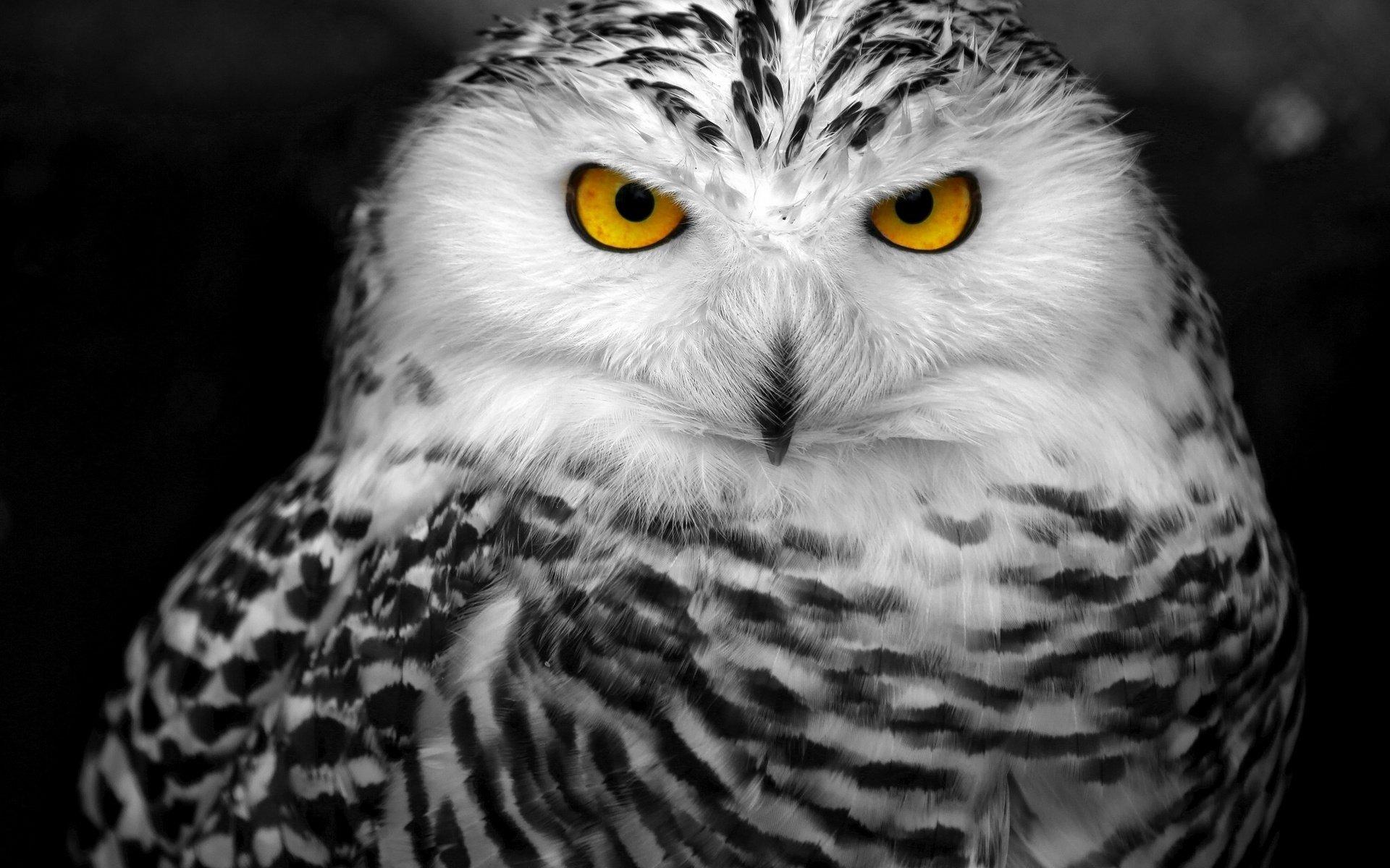 Owl Wallpapers Best