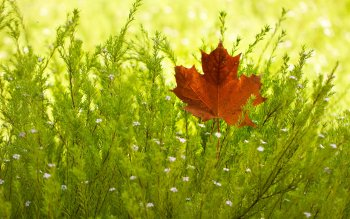 Earth - Leaf Wallpapers and Backgrounds ID : 358974
