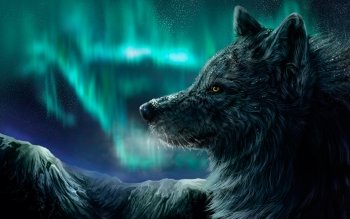 Dierenrijk - Wolf Wallpapers and Backgrounds ID : 359138