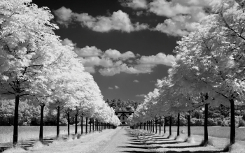 Fotografía - Black & White Wallpapers and Backgrounds ID : 360850