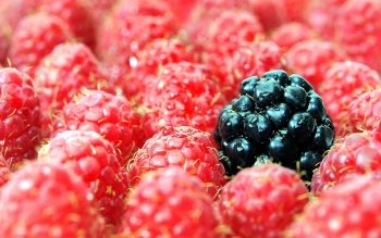 Food - Berry Wallpapers and Backgrounds ID : 361807