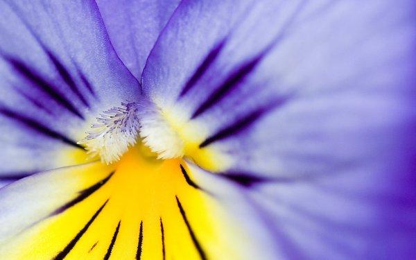 Earth Flower Flowers Iris HD Wallpaper   Background Image