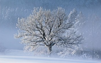 Земля - Winter Wallpapers and Backgrounds ID : 364248