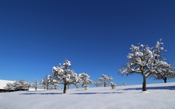Earth - Winter Wallpapers and Backgrounds ID : 366869